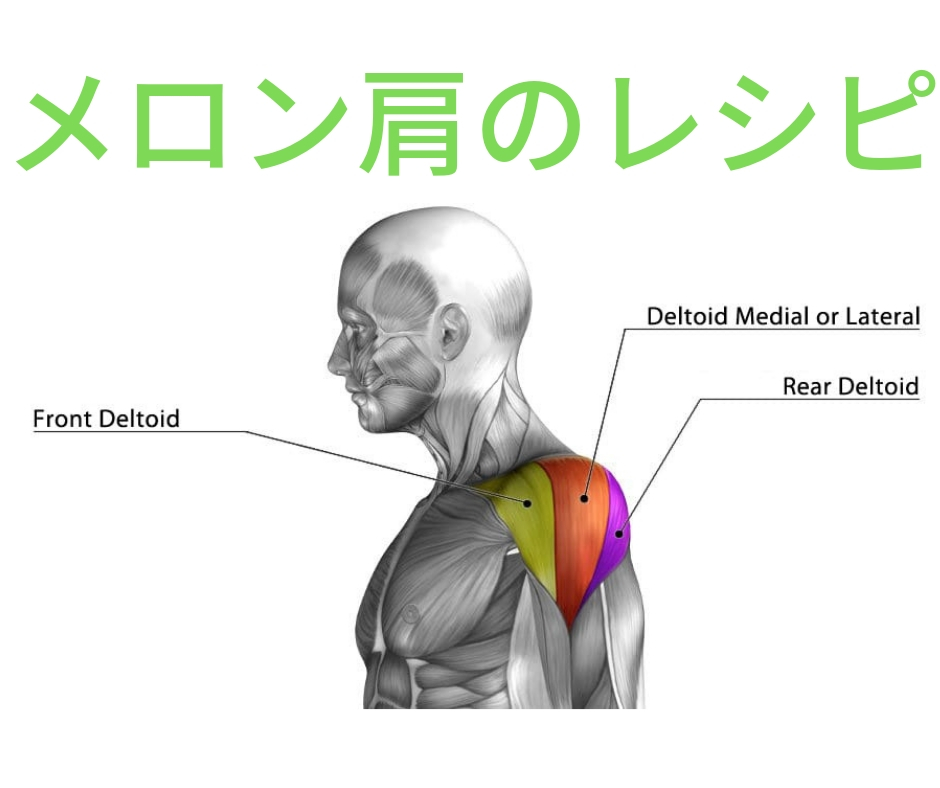 【三角筋】サイドレイズのやり方やフォームのコツを専門家が徹底解説。重量の目安は?