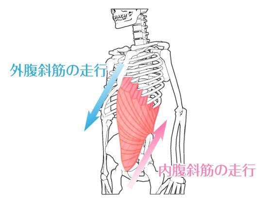 外腹斜筋との違いは